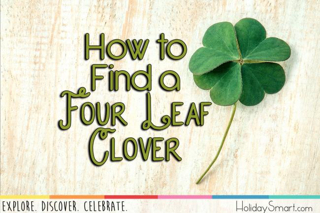How to  Find a  Four Leaf Clover