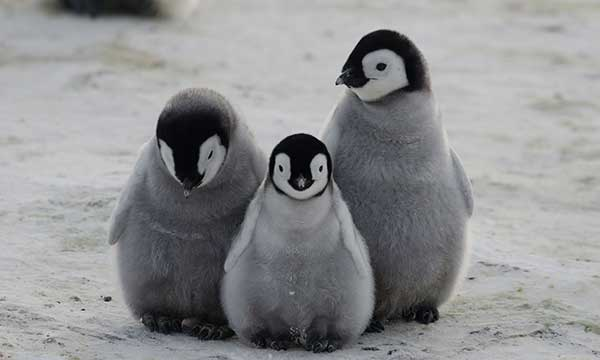 Penguin Awareness Day | Holiday Smart