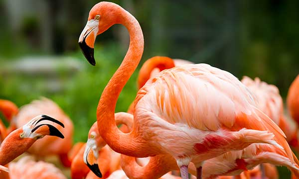 Pink Flamingo Day