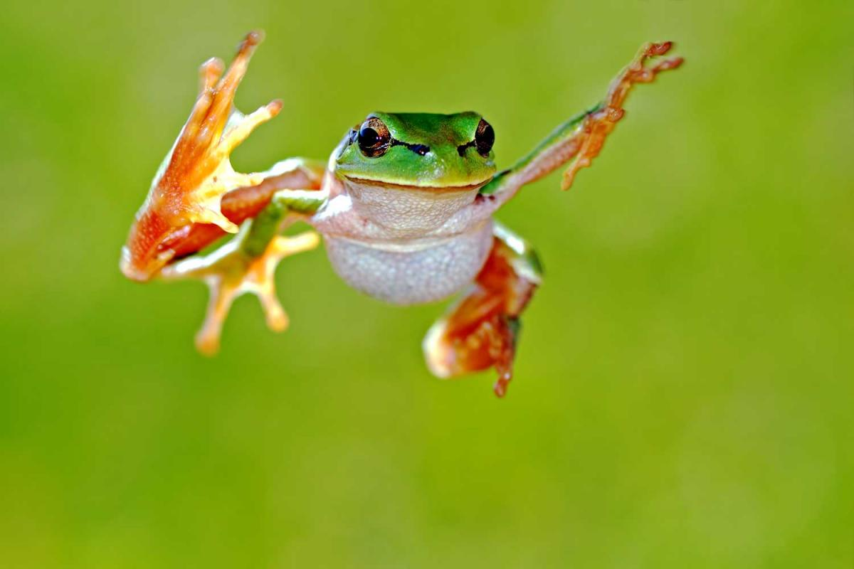Frog Jumping Day