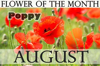 Augusts birth flowers holidaysmart august flower poppy mightylinksfo