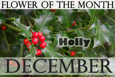 December S Birth Flowers Holidaysmart