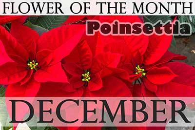 Flowers In December Font Flowers Healthy