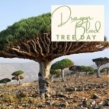 Epic Tree Holidays - Dragon Blood Tree Day