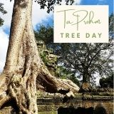 Epic Tree Holidays - TaProhm Tree Day
