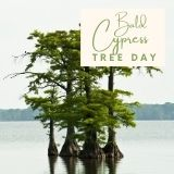 Epic Tree Holidays - Bald Cypress Tree Day