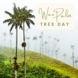 Epic Tree Holidays - Palm Tree Day