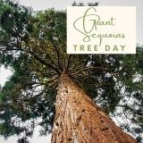 Epic Tree Holidays - Giant Sequoia Tree Day