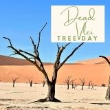 Epic Tree Holidays - Dead Vlei Tree Day