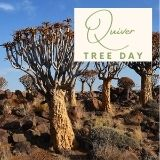 Epic Tree Holidays - Quiver Tree Day