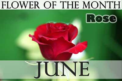June S Birth Flowers Holiday Smart