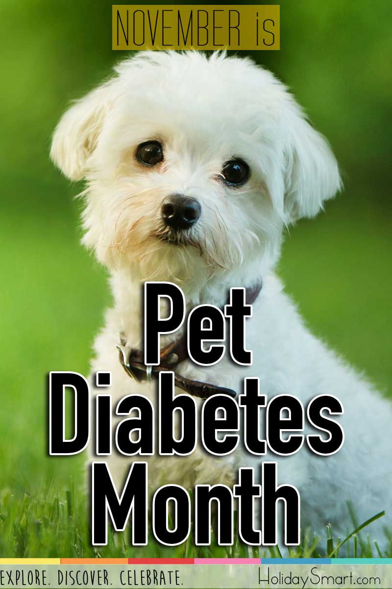 November is Pet Diabetes Month