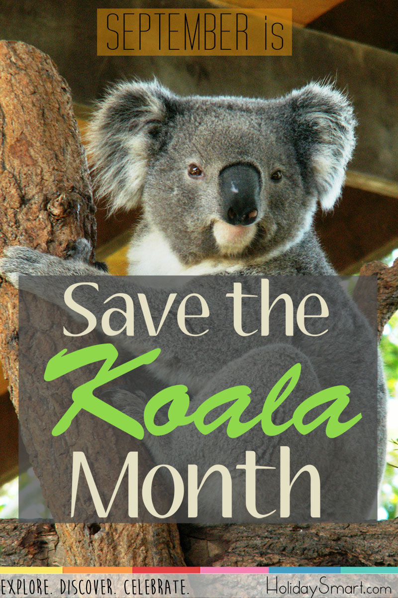 September is Save the Koala Month!