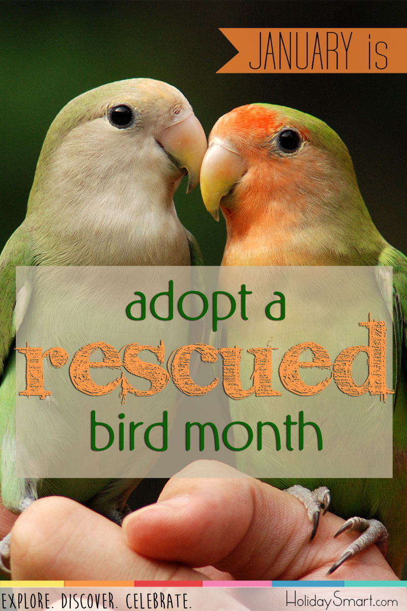 Adopt A Rescued Bird Month Holidaysmart