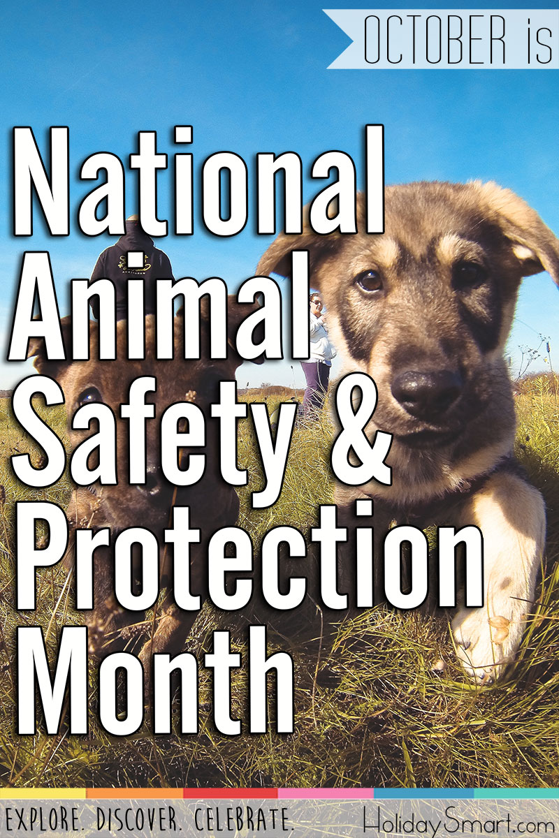 October is National Animal Safety and Protection Month