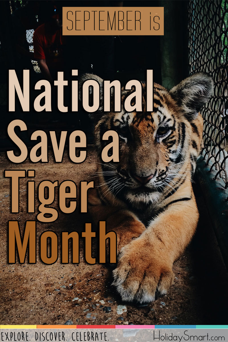 September is National Save a Tiger Month!