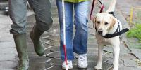 Guide Dog Day