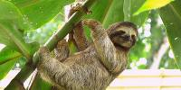 International Sloth Day