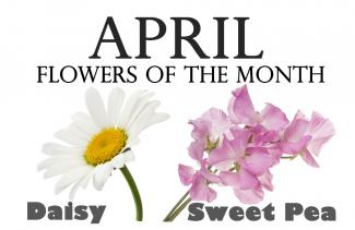 Flowers Of The Month Holidaysmart