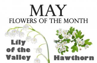 May S Birth Flowers Holidaysmart