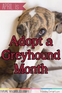 April is Adopt a Greyhound Month!