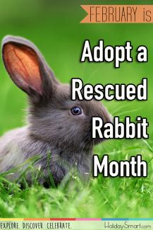 February is Adopt a Rescued Rabbit Month