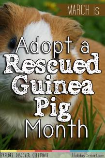 March is Adopt a Rescued Guinea Pig Month