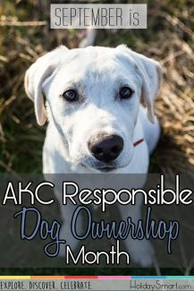 September is AKC Responsible Dog Ownership Month!