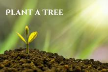 Arbor Day / Plant a Tree Day